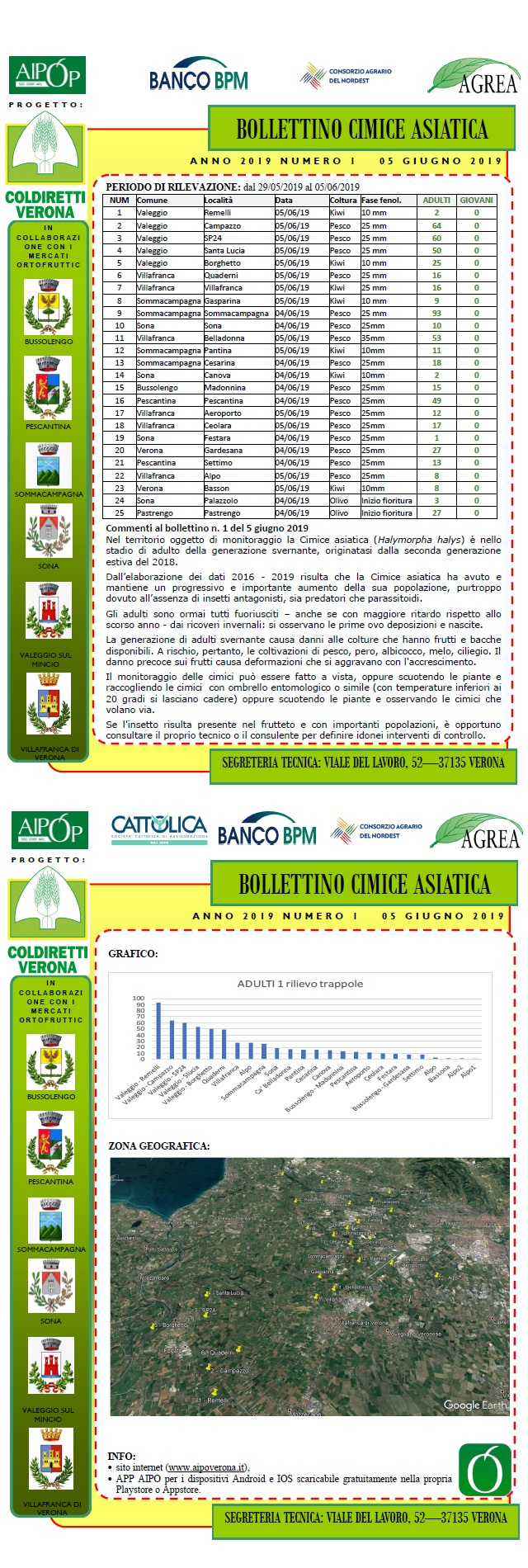 BOLLETTINO CIMICE ASIATICA N. 1 DEL 05/06/2019