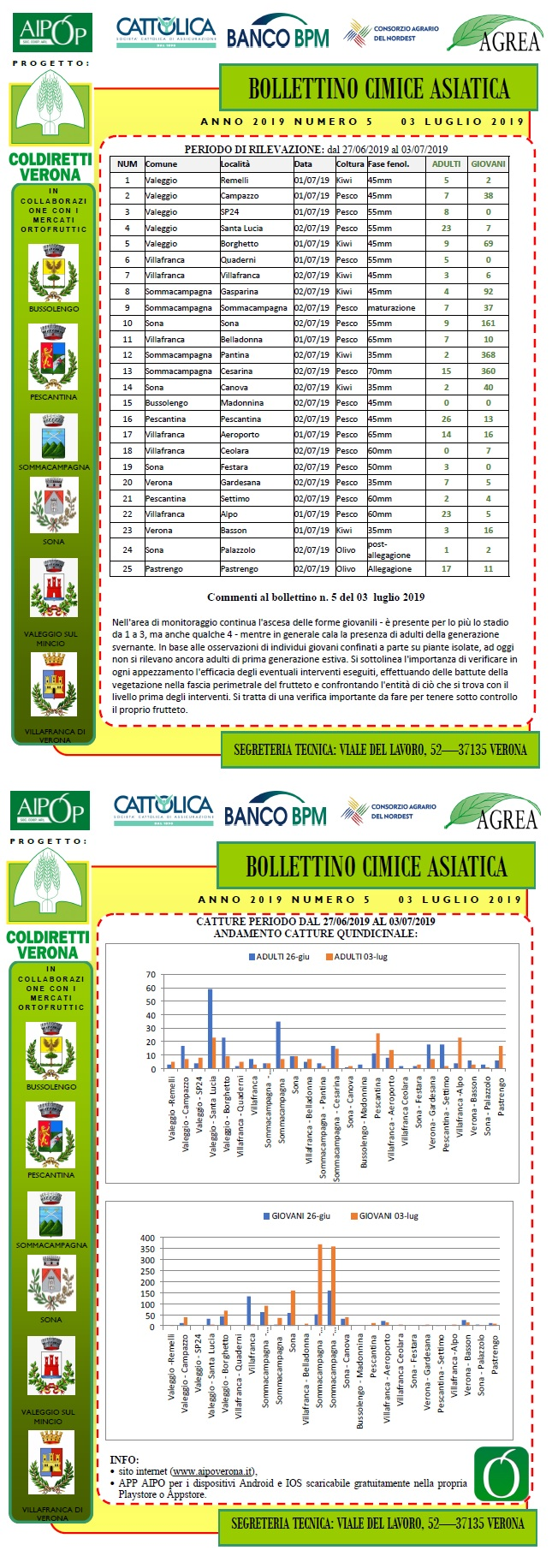 BOLLETTINO CIMICE ASIATICA N. 5 DEL 03/07/2019