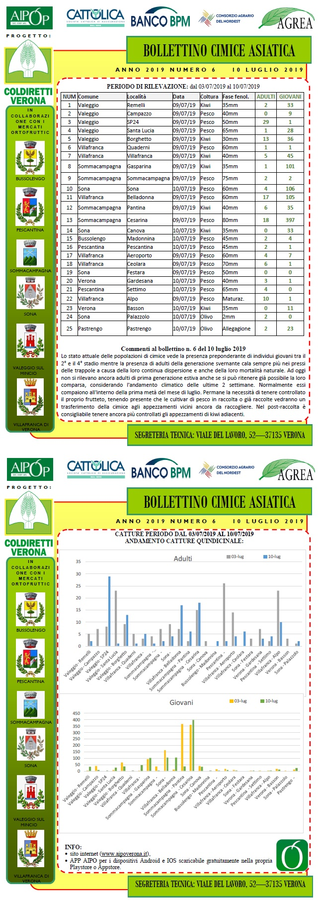 BOLLETTINO CIMICE ASIATICA N. 6 DEL 10/07/2019