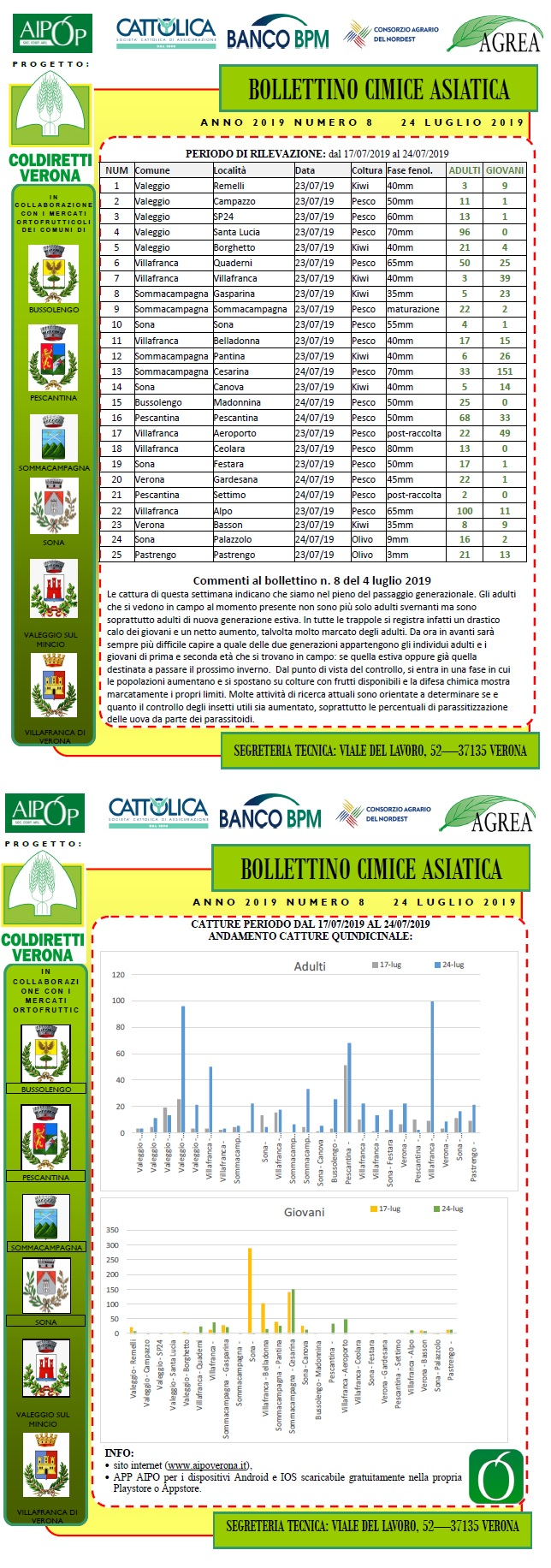 BOLLETTINO CIMICE ASIATICA N. 8 DEL 24/07/2019
