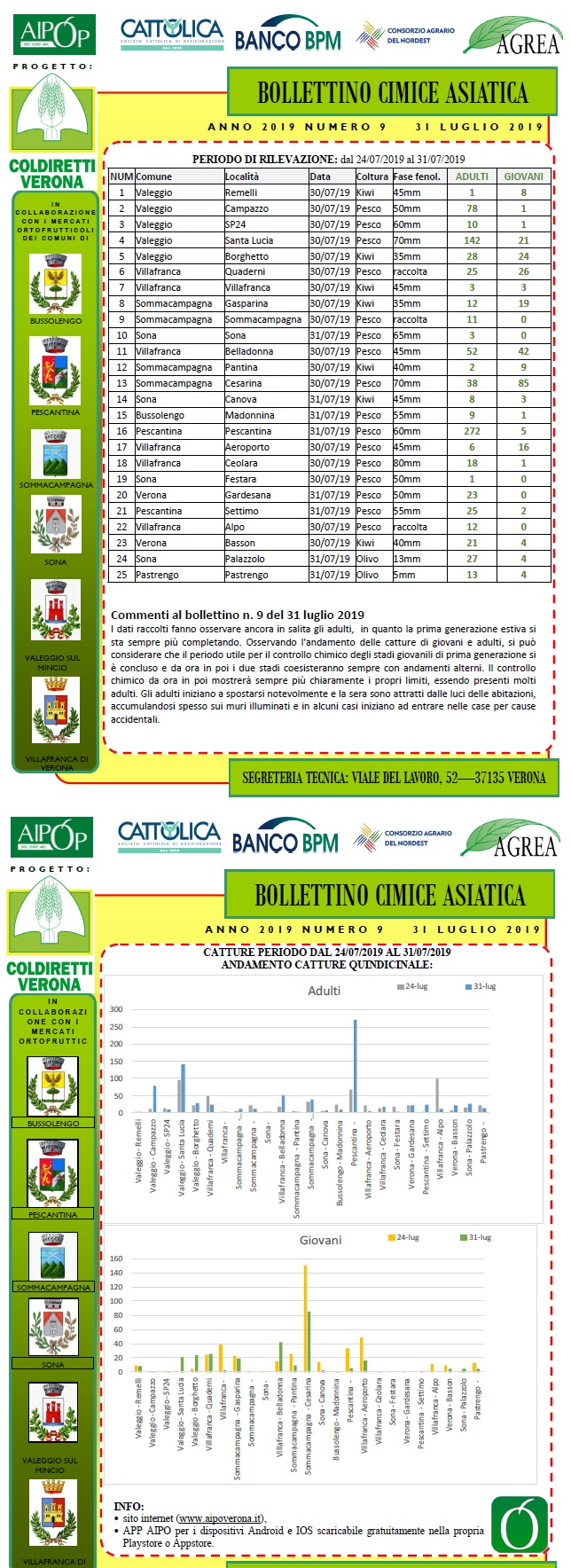 BOLLETTINO CIMICE ASIATICA N. 9 DEL 31/07/2019
