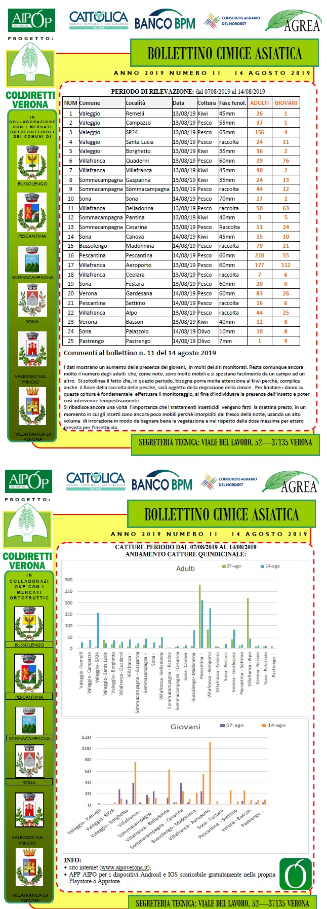 BOLLETTINO CIMICE ASIATICA N. 11 DEL 14/08/2019
