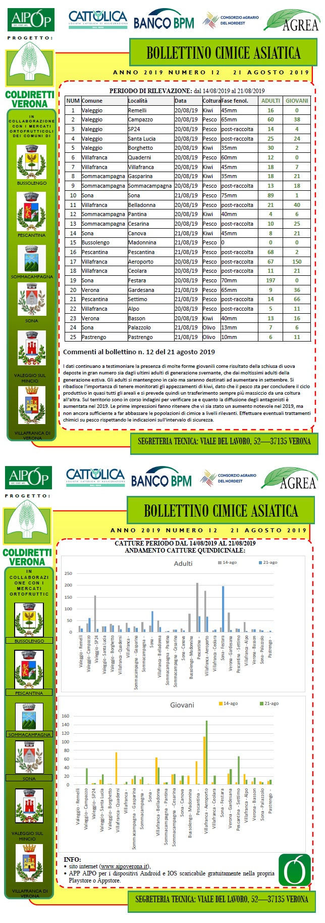 BOLLETTINO CIMICE ASIATICA N. 12 DEL 21/08/2019