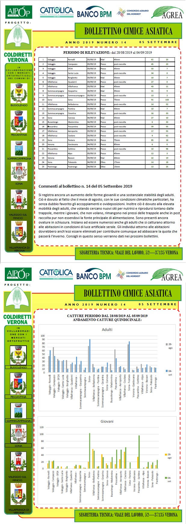 BOLLETTINO CIMICE ASIATICA N. 14 DEL 04/09/2019