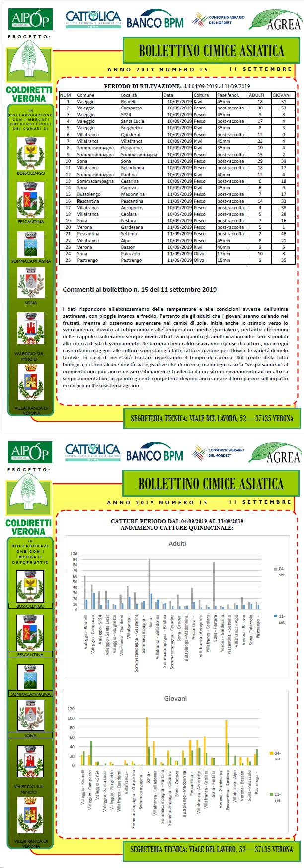 BOLLETTINO CIMICE ASIATICA N. 15 DEL 11/09/2019