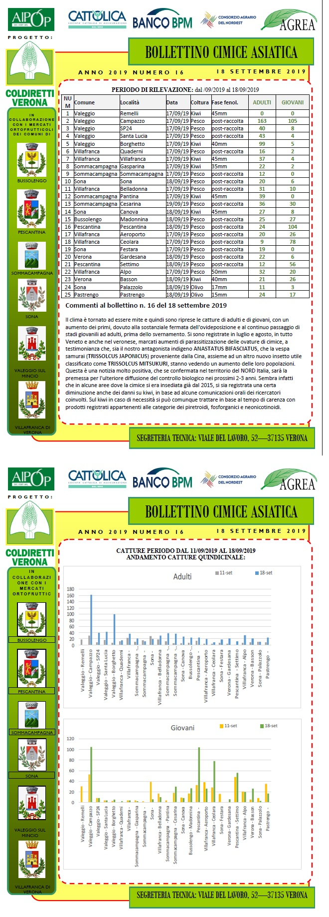 BOLLETTINO CIMICE ASIATICA N. 16 DEL 18/09/2019